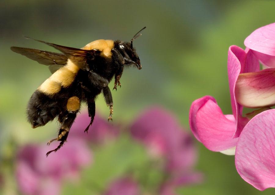 bumblebee_custom-3216364da97731c007c332f32ff4027b69ed3f6e-s900-c85